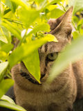 Gray Cat Hiding. In The Shadows of Trees Royalty Free Stock Photos
