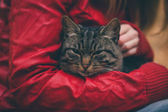 Gray Cat homeless and Woman hugging hands Royalty Free Stock Photos