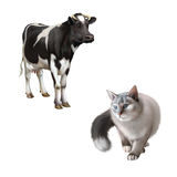 Gray Cat hunting, Standing cow. Isolated on white background Stock Photography