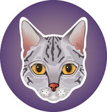 Gray cat icon. Image of colorful gray spotted cat on a circle Stock Photography