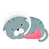 Gray Cat Injury Splinting Leg Illustration Stock Photos