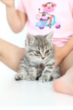 Gray cat Stock Images