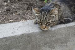 The gray cat lies on the curb. Close-up royalty free stock image