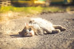 A gray cat Lies on the ground. Summer Stock Images