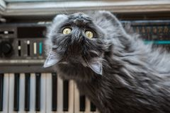 Gray cat lies on the piano Stock Images