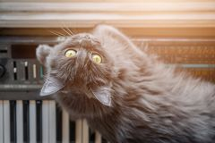 Gray cat lies on the piano Stock Photo