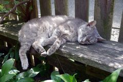 Gray cat lies on a wooden bench near a fence on a sunny day stock photography