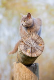 Gray cat on a log Stock Photo