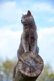 Gray cat on a log Stock Photo