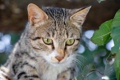 Gray cat looking toward camera from tree. Face closeup view stock photo