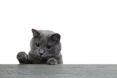 Gray cat looking on wood plank Stock Photo