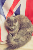 Gray cat lying on a Great Britain flag.  royalty free stock images