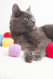 Gray cat lying Royalty Free Stock Photos