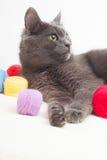 Gray cat lying Royalty Free Stock Photos