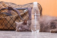 Gray cat is lying near a suitcase and a bottle of water. Waiting for the train at the train station. Passenger with a suitcase. While traveling stock photos
