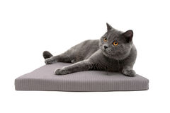 Gray cat lying on a soft pillow isolated on white background Stock Photo