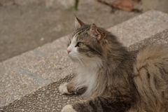Gray Cat Stock Photos