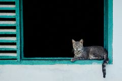 Gray cat lying in the window. European Shorthair cat lying on aquamarine window in a white wall Stock Images