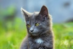 Cat in the nature royalty free stock photos