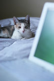 Gray cat next to white laptop Royalty Free Stock Photos