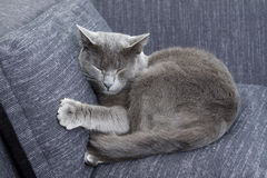 Gray Cat On A Sofa Royalty Free Stock Photography
