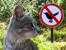 Gray Cat On The Background Of Sign No Birds And Green Grass. Royalty Free Stock Images