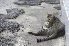 Gray Cat ooking detrás imagen de archivo