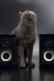 Gray cat with open mouth singing with two stereo audio speakers Royalty Free Stock Image