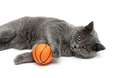 Gray cat with an orange ball on a white background Stock Images