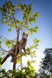 Gray Cat para arriba en el pequeño árbol, colocándose feroz Imagen de archivo