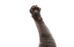 Gray cat paw. On white background stock photo