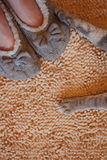 Gray cat paws and human feet in slippers. On beige bathroom carpet background Stock Photos