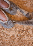 Gray cat paws and woman feet in slippers Stock Image
