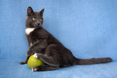 Gray cat plays with a green ball stock photos