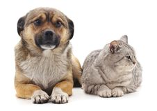 The gray cat and puppy. On a white background stock photo
