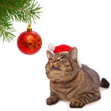 Gray cat with red Santa Claus hat . Stock Images