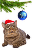 Gray cat with red Santa Claus hat . Gray cat with red Santa Claus hat and Christmas balls isolated on white Stock Photography