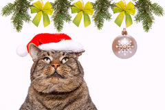 Gray cat with red Santa Claus hat . Royalty Free Stock Images