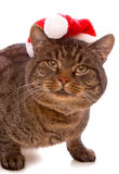 Gray cat with red Santa Claus hat. . Stock Photos