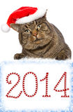 Gray cat with red Santa Claus hat. . Royalty Free Stock Photography