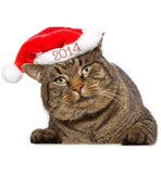 Gray cat with red Santa Claus hat. . Royalty Free Stock Image