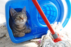 Gray cat resting in blue bucket Royalty Free Stock Photo