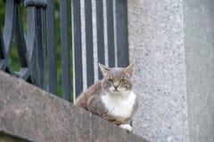 Gray cat resting Stock Photo
