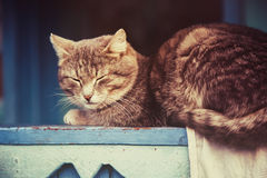 Gray Cat Resting Stock Images