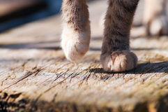 Gray cat's paws detail Royalty Free Stock Photo
