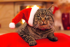 Gray Cat with Santa hat and a fireplace. Royalty Free Stock Photo