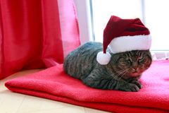 A gray cat with Santa hat sits at home by the window in winter. A gray cat with red Santa hat sits on a woolen blanket by the window in winter stock photography