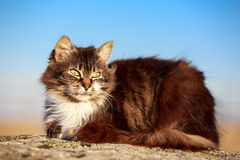 Gray cat. Sit on rock Royalty Free Stock Photo