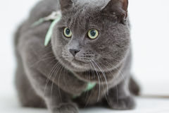 Gray cat siting on the surface Stock Photos