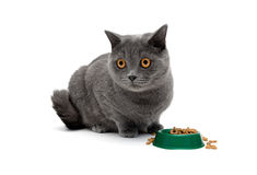 Gray cat sits beside a bowl of food Stock Photography